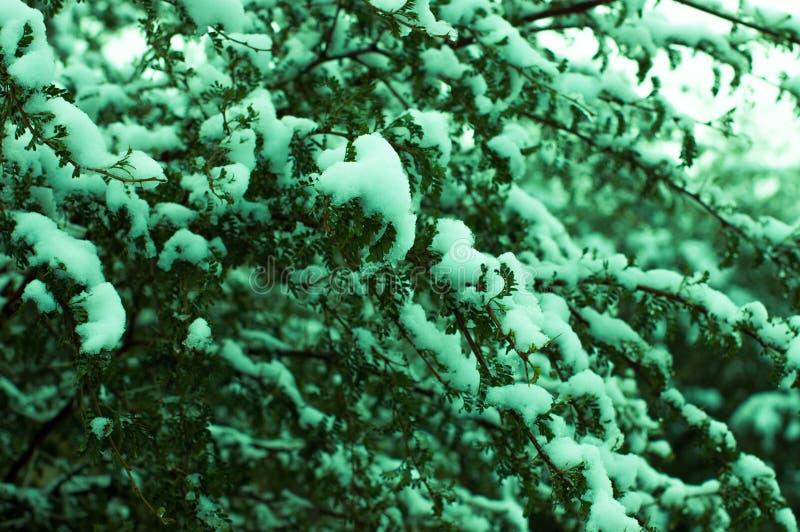 Coverd del árbol por la nieve fotos de archivo