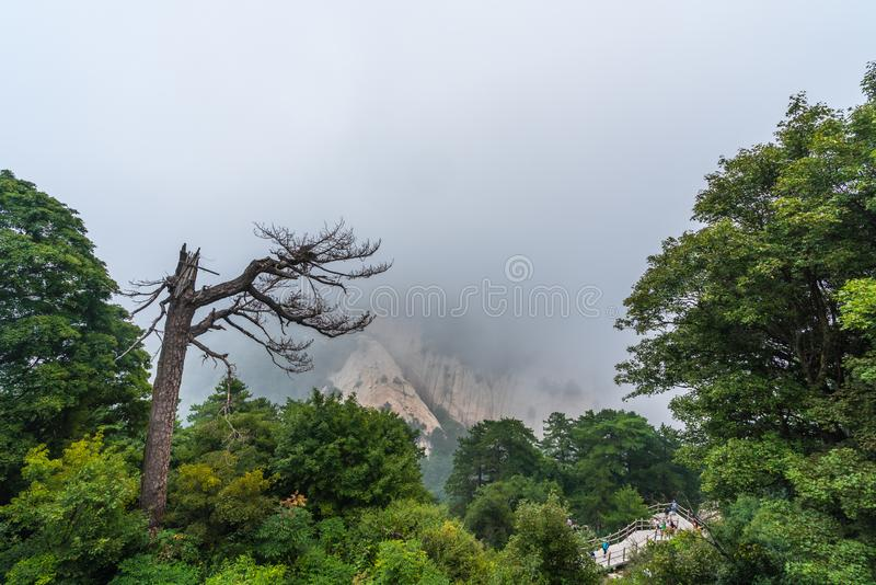 Barren tree and trail path in Hua Shan mountain stock photography