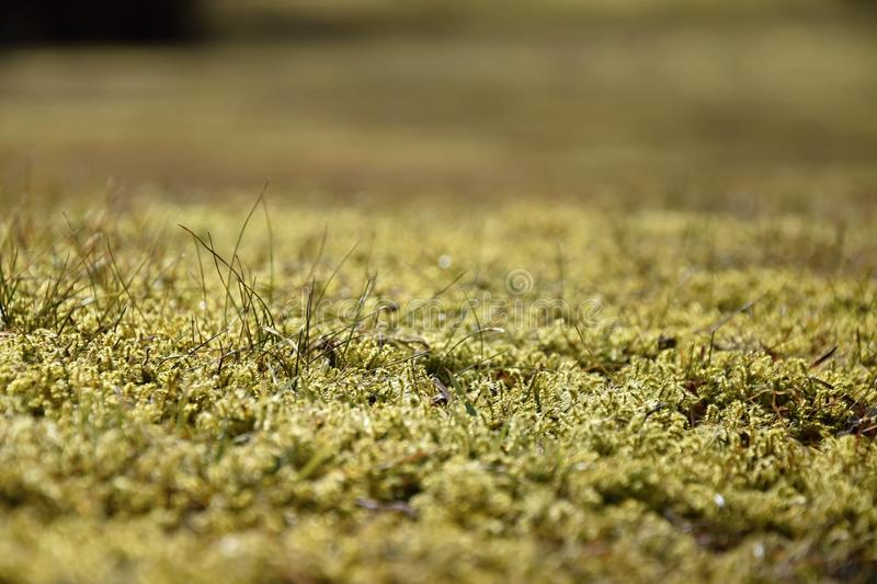Covered by moss garden lawn. Grass stock photography