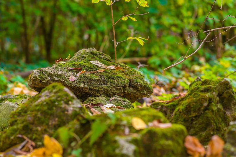Covered with moss rocks close up in the forest.  royalty free stock image