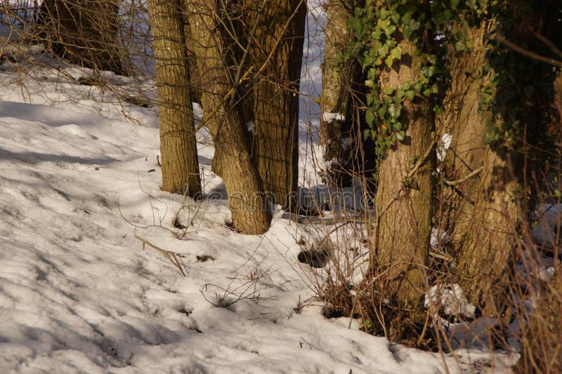 A covered with snow forest - France royalty free stock photos