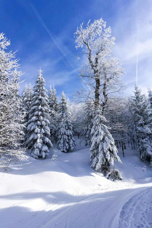 Covered by the snow trees in the mountain forest. Blue sky in the background, sunny winter day royalty free stock photos
