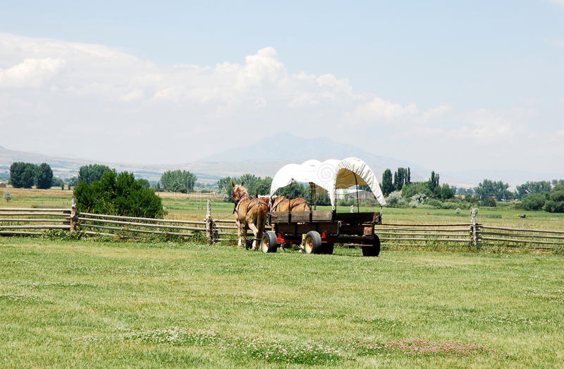 Covered wagon. In the fields with a horses thrown covered wagon royalty free stock image