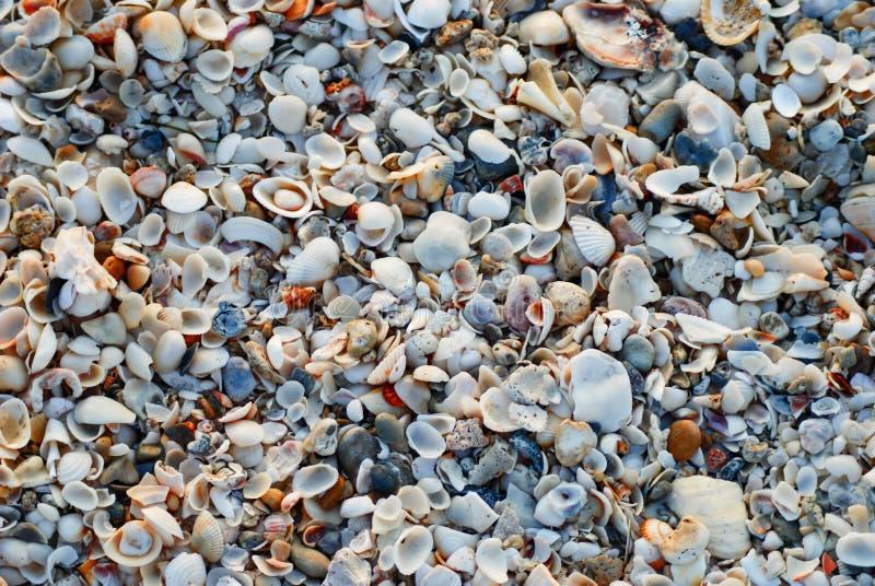 Coverheadmening van zeeschelpen bij strand royalty-vrije stock fotografie
