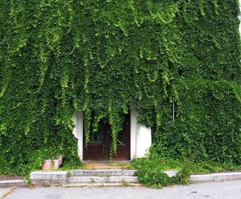 Coverlet verde di un'edera immagine stock