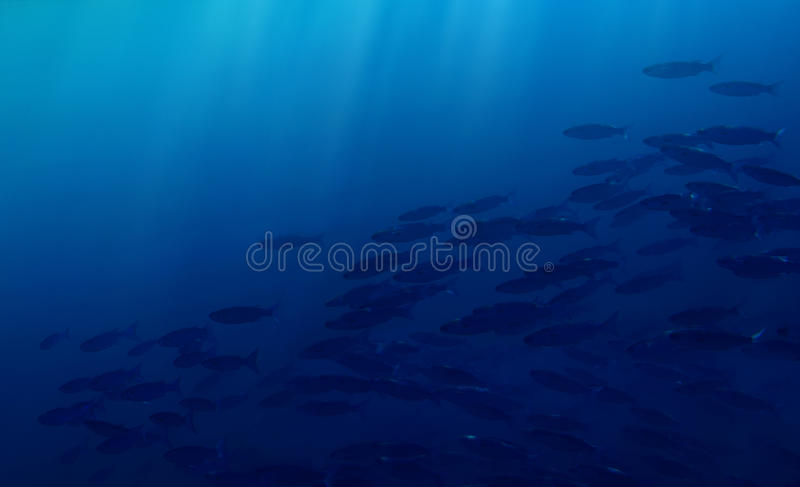 Download Covey of finfishess stock image. Image of blue, deeply - 12224911