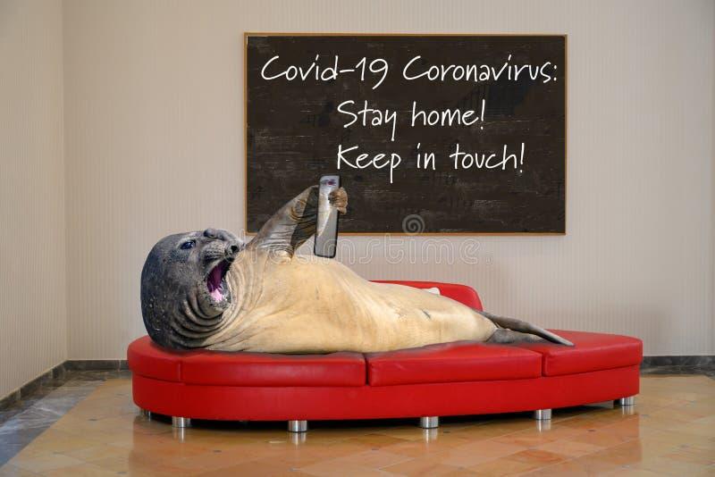 Covid-19 Coronavirus: Håll kontakten! Använd mobiltelefonen för att se familj och vänner royaltyfri foto