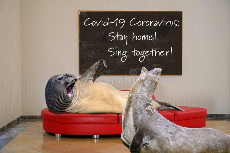 Covid-19 Coronavirus: Stanna hemma! Sjung ihop för gott humör royaltyfria foton