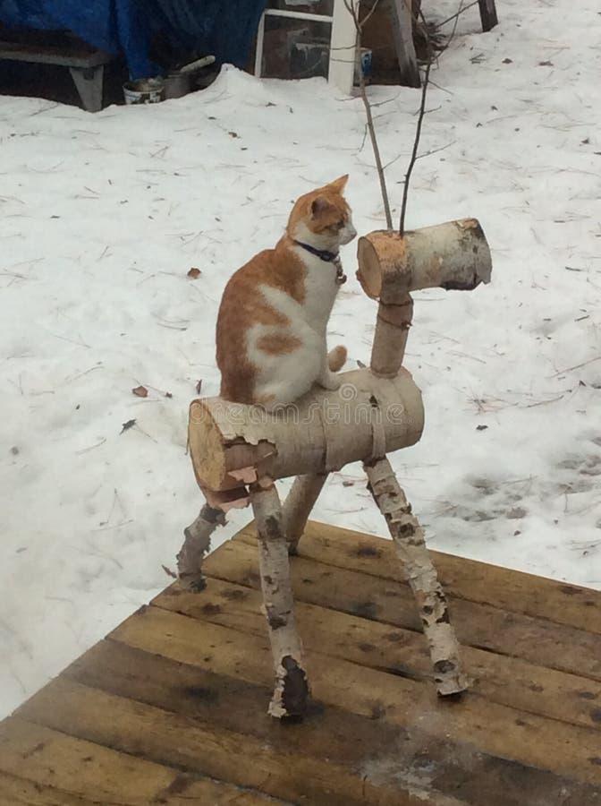 Cow'cat' στοκ εικόνες με δικαίωμα ελεύθερης χρήσης