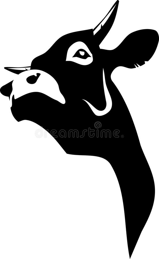 Cow. Vector illustration of a cow black and white