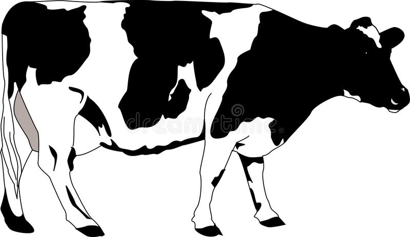 Download Cow stock vector. Illustration of domestic, spotted, drawing - 11556065