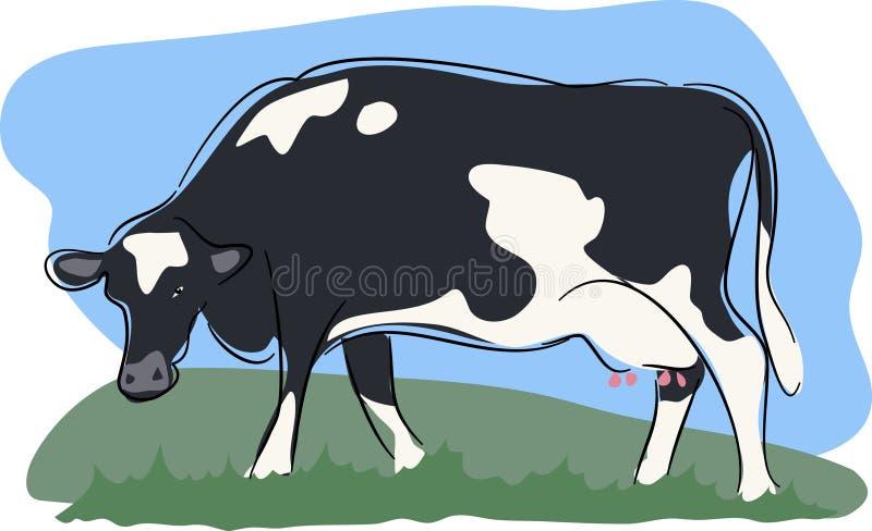 Cow stock illustration