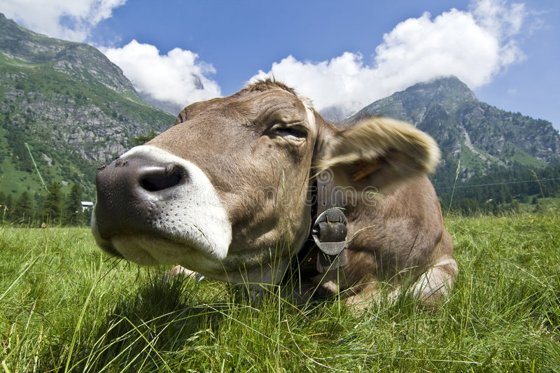 Download Cow stock photo. Image of landscape, grass, leather, clouds - 5644172