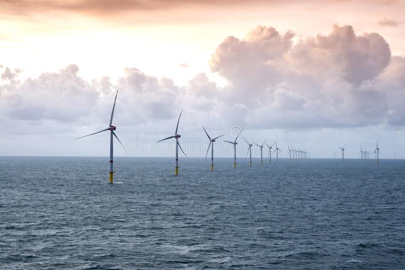 Cow in alpine landscapeSunset over offshore wind farm - green power generation stock photo
