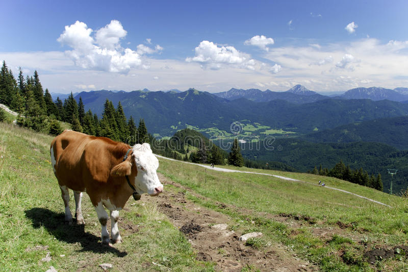 Download Cow At The Alps Royalty Free Stock Photography - Image: 21067167