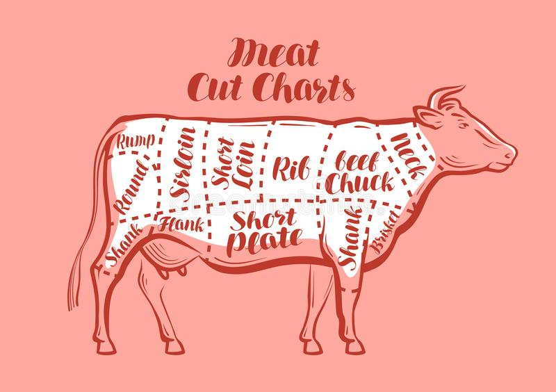 Cow, beef, meat cuts. Scheme or diagrams for butcher shop. Vector illustration. Cow, beef, meat cuts. Scheme or diagrams for butcher shop. Vector vector illustration