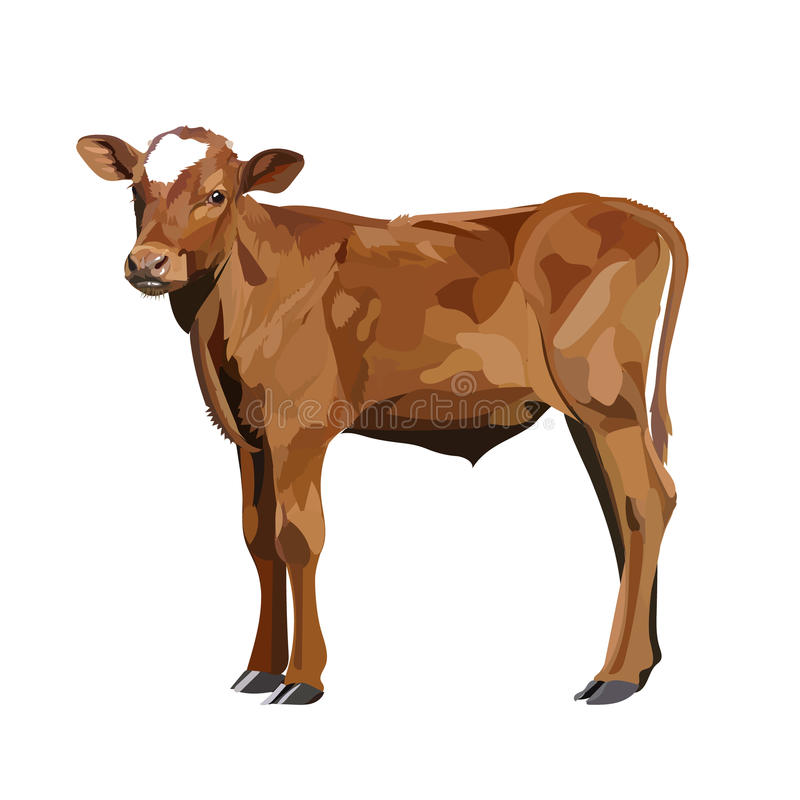 Cow Calf brown, vector animal stock illustration