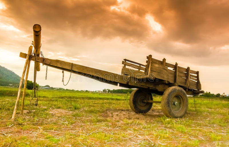 Cow cart royalty free stock image
