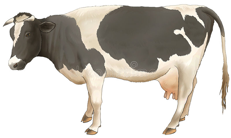 The cow costs and looks. stock photo