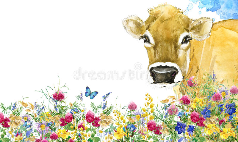 Cow. Cow watercolor illustration. Milking Cow Breed. stock image