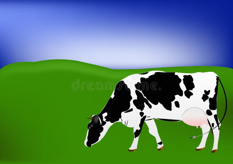 Download Cow of dairy breed stock illustration. Image of field - 22199236