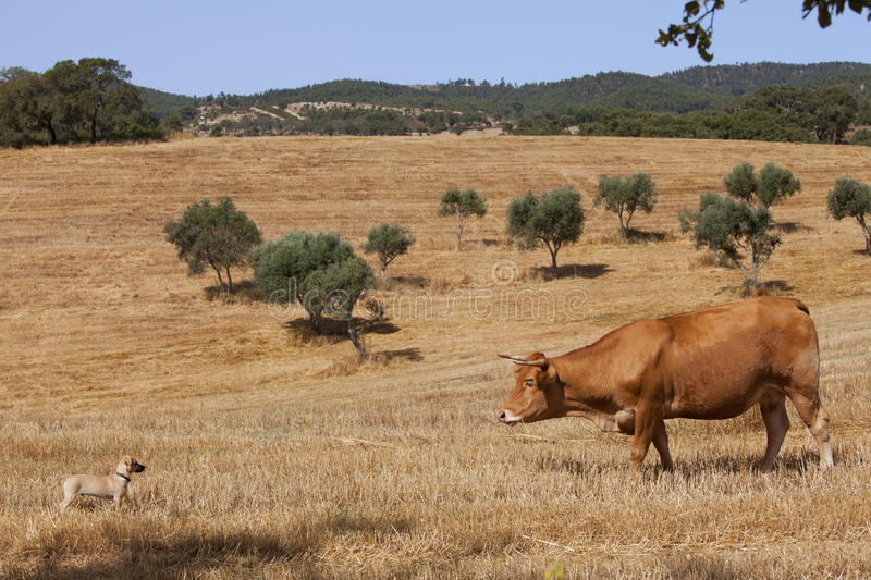 Download Cow and dog stock photo. Image of green, brown, fresh - 23065020
