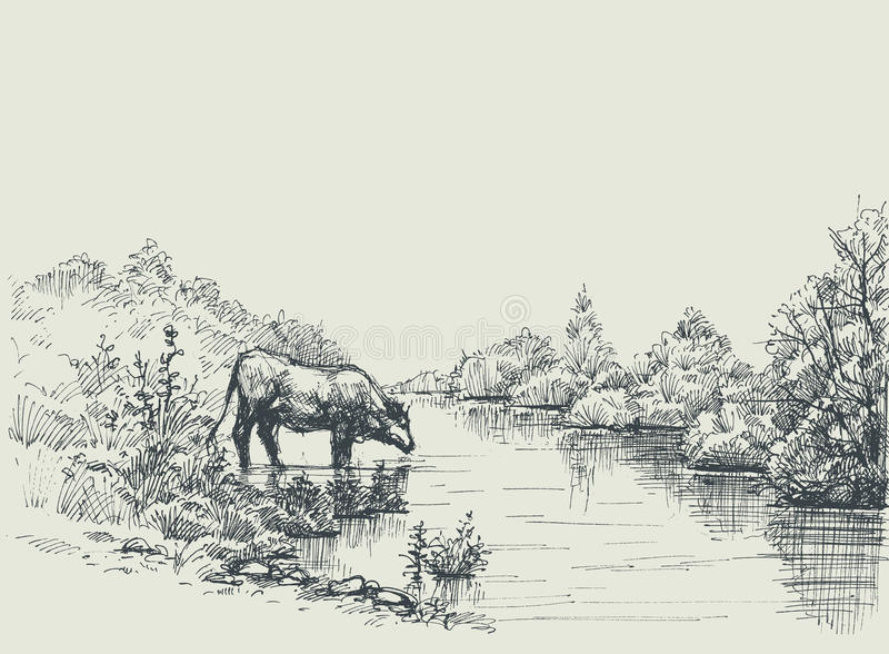 Cow drinking water at the river shore. Graphic landscape, artistic background vector illustration