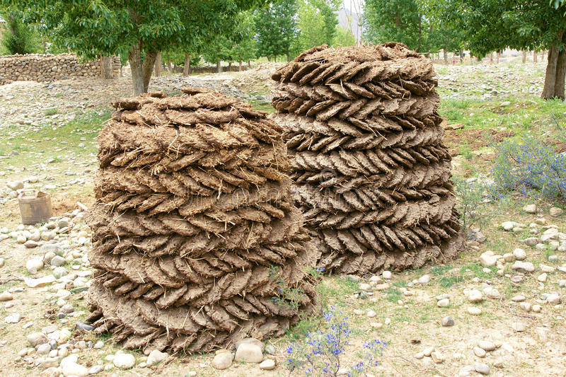 Cow-dung fuel. The close-up of dried Cow Dung pats used for fuel in Tibet, China stock images
