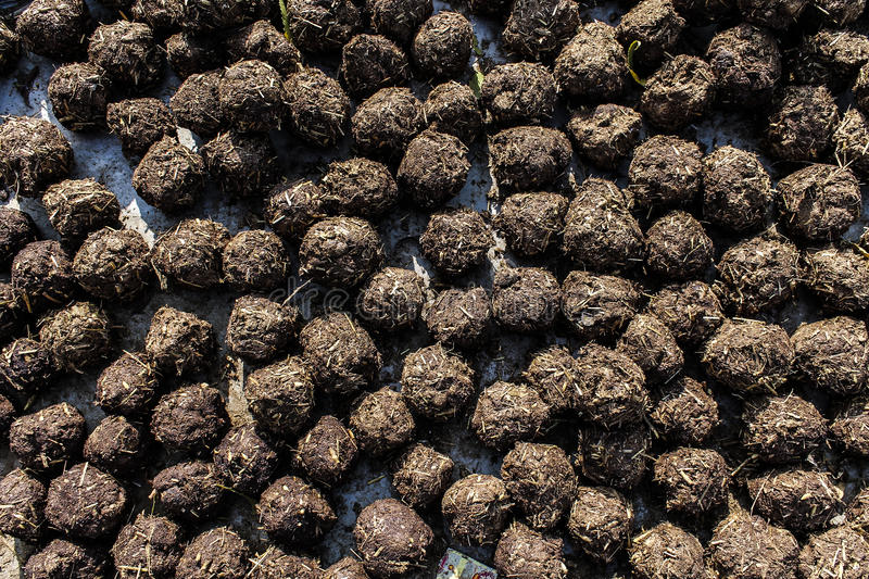 Cow-dung roll. Photograph of dungs boll background royalty free stock photo