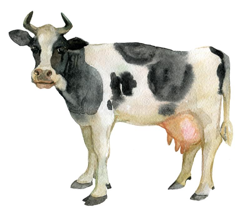 Cow, farm animals, isolated on white, watercolor stock illustration