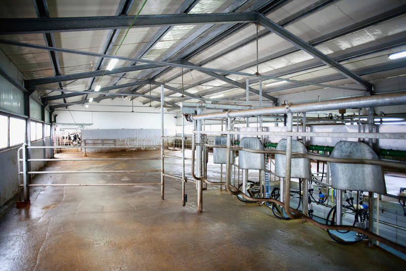 Cow farm milking system stock photos