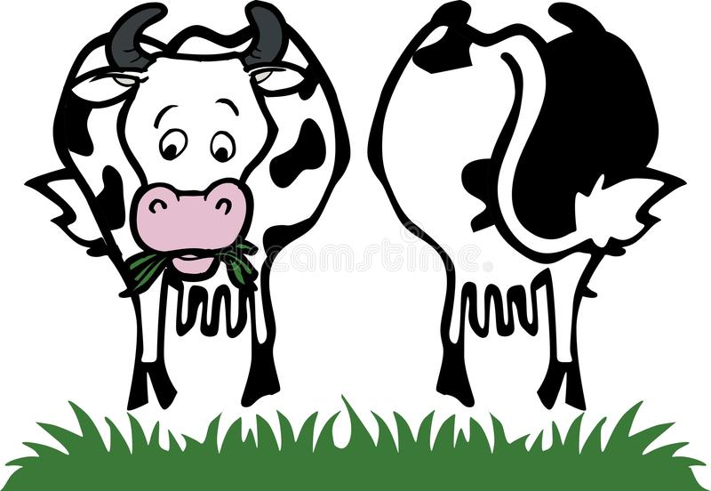 Cow Front And Back Stock Photography