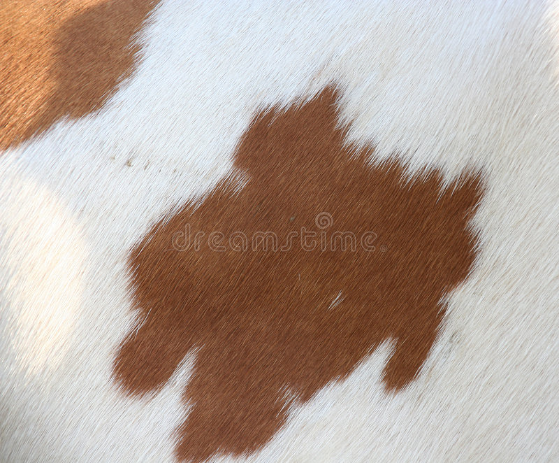 Cow fur stock images