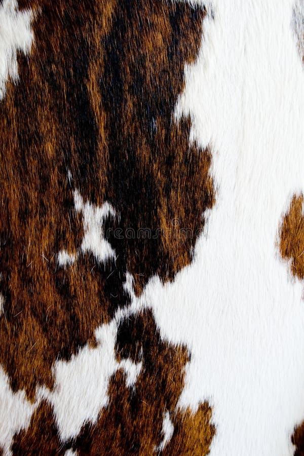 Free Cow Fur Texture Royalty Free Stock Photo - 10683475