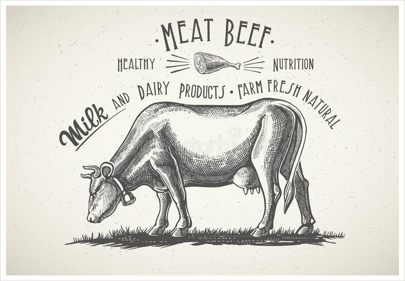 Cow in graphical style. stock illustration