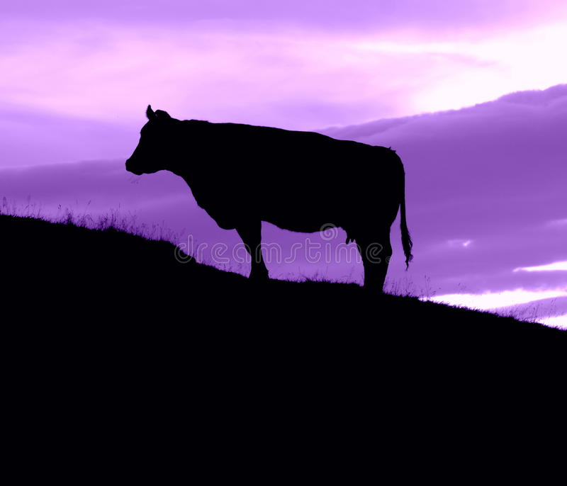 Download Cow On A Hill With A Purple Sky Stock Image - Image: 26759125