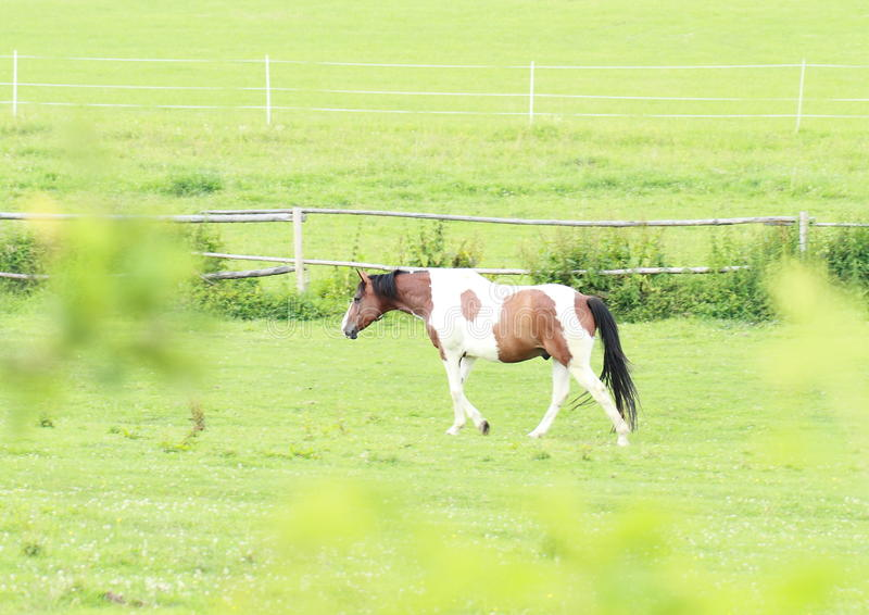 Download Cow horse stock image. Image of standing, grass, walk - 25413005