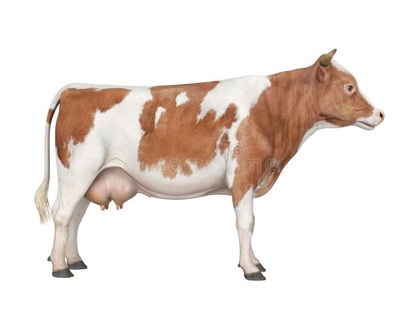 Cow Isolated. On white background. 3D render royalty free illustration