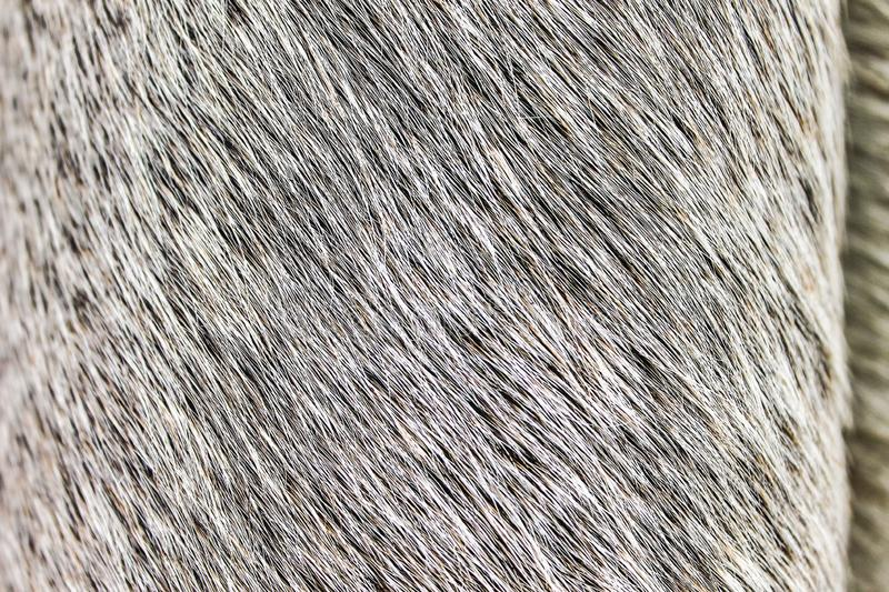 Cow Leather Texture Closeup Macro Nobody Leather. Natural Art Zoo royalty free stock photos