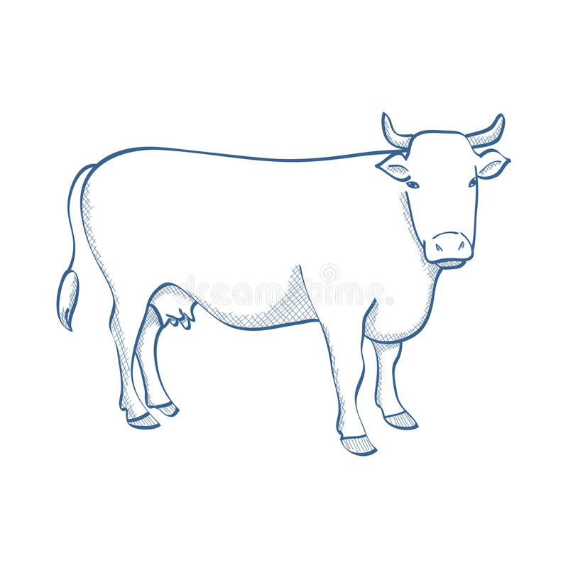 Cow. A line drawing of cow vector illustration