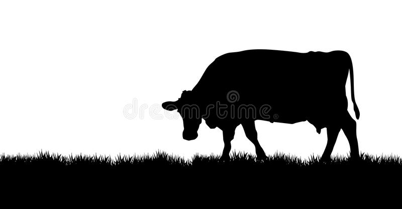 Cow on a meadow. A vector cow grazing on the meadow