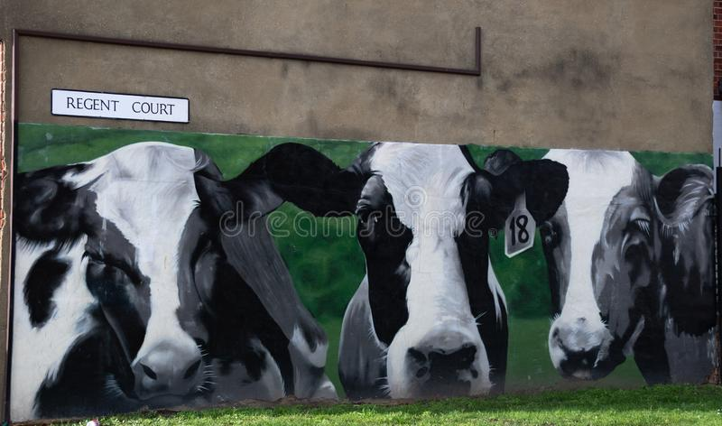 Cow Mural in Reading. Reading, United Kingdom - February 09 2019:   A cow Mural painted on the side of a house on teh corner of Great Knollys St and Regent Court stock image