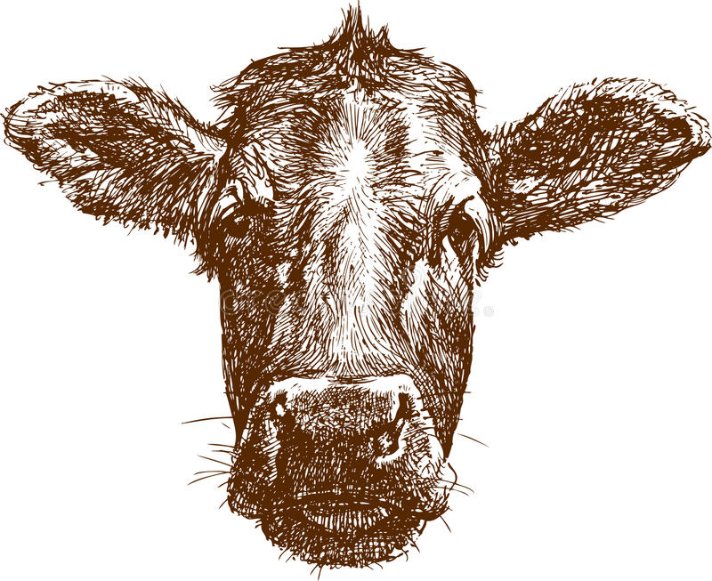 Cow muzzle. The vector drawing of a muzzle of cow in style of sketch vector illustration
