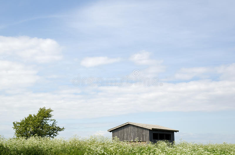 Cow parsley at house royalty free stock photo
