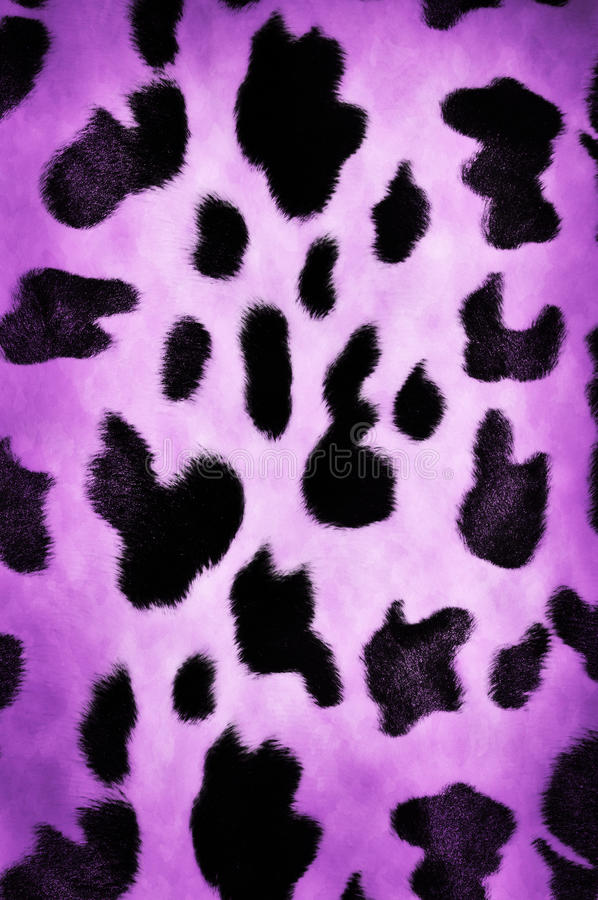 Cow pattern. Natural cow pattern spots background or texture royalty free stock image