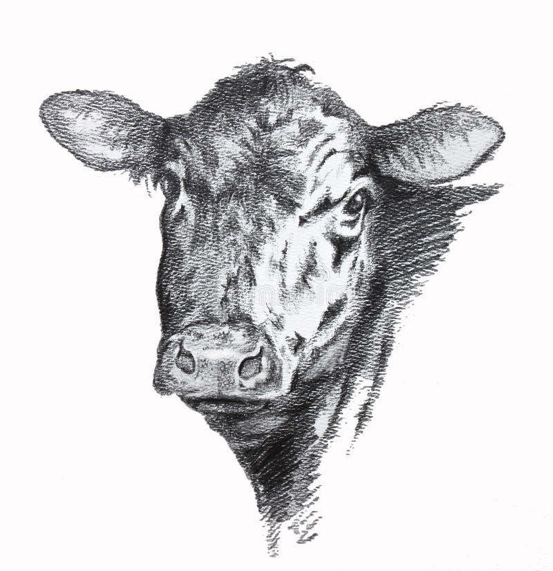 Free Cow Pencil Drawing Stock Photography - 53605722
