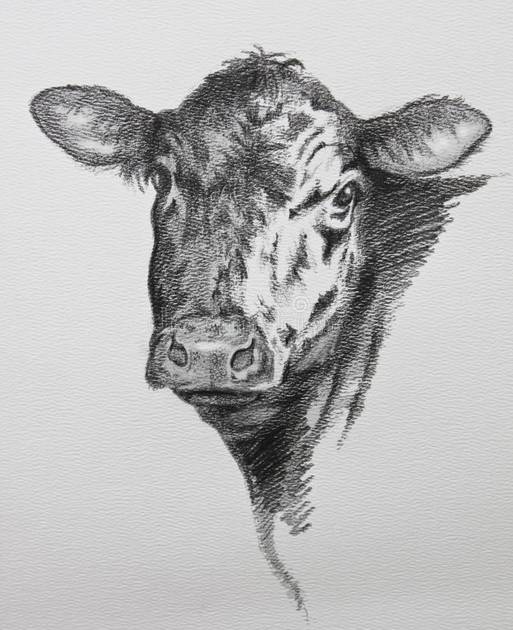 Cow pencil drawing vector illustration