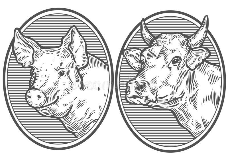Cow and pig head. Hand drawn sketch in a graphic style. Vintage vector engraving. Illustration for poster, web. Isolated on white background royalty free illustration
