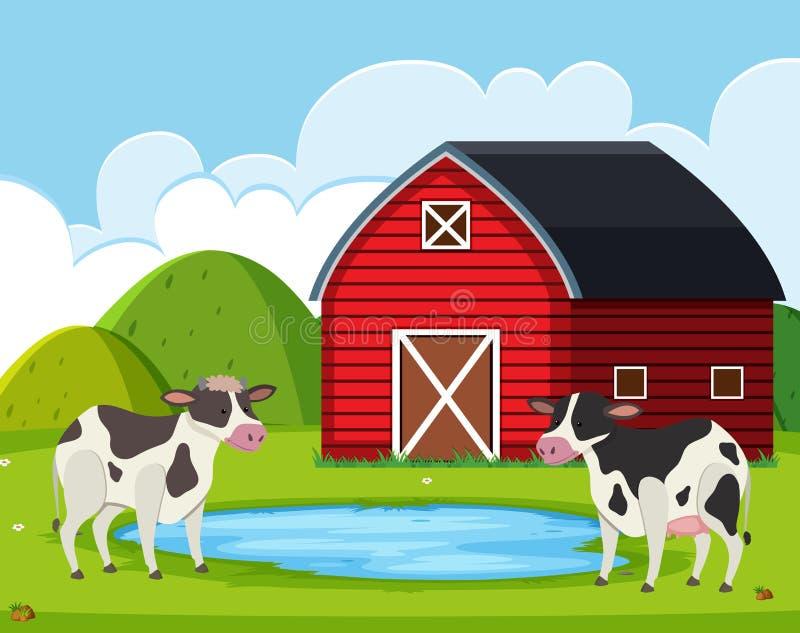 Cow at rural farm house vector illustration