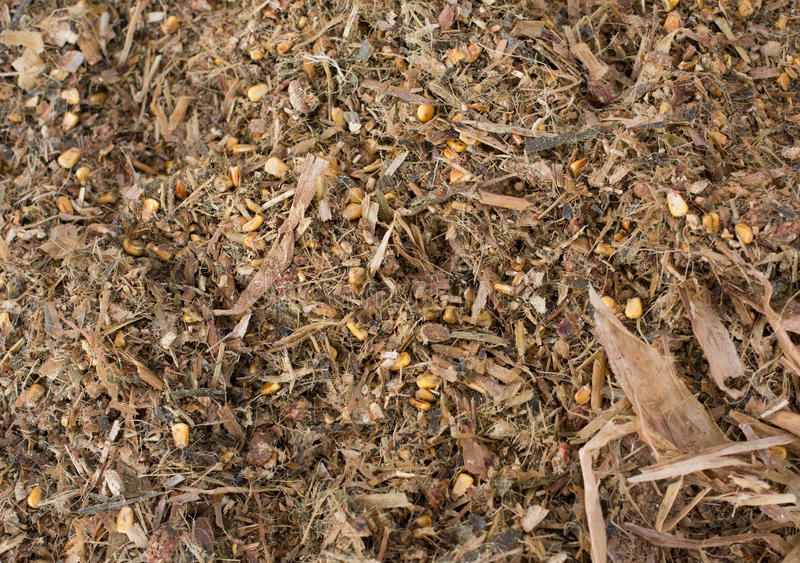 Cow`s feed silage. Close up of silage pile. Cattle feed as texture and background stock photos